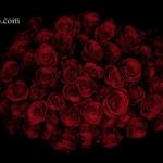 güller ve silahlar