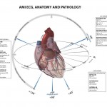 ECG-Anatomy
